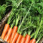 Целительная сила ботвы моркови