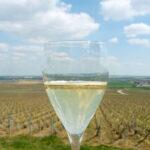 shampanskoe-iz-vinograda